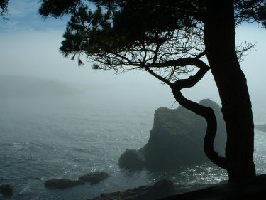 A foggy day on the Mendocino Coast